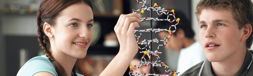 Students working on a DNA model